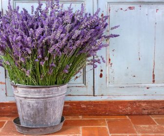 7 ierburi vindecatoare pe care le poti creste acasa lavanda