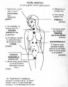 Rugaciunea Tatal Nostru si glandele endocrine