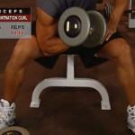 Brate - Bicepsi - Masa musculara - 3. Concentration curl