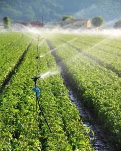 Evitati pesticidele