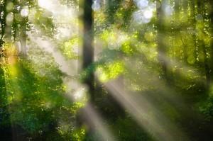 Raze de lumina