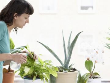 Cumparati-plante-ce-purifica-aerul.