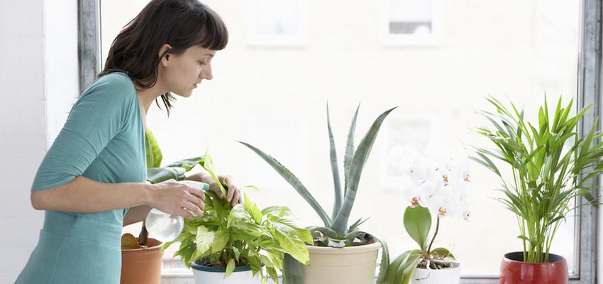 Detoxifiati aerul cu ajutorul plantelor