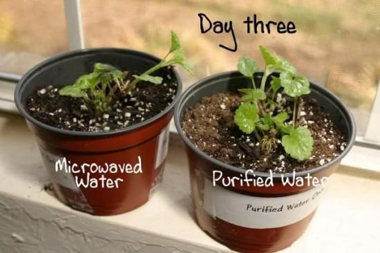 Test cu apa fiarta la microunde 3