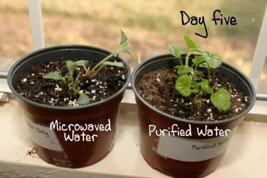 Test cu apa fiarta la microunde 5