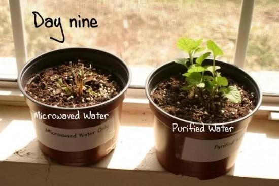 Test cu apa fiarta la microunde 9