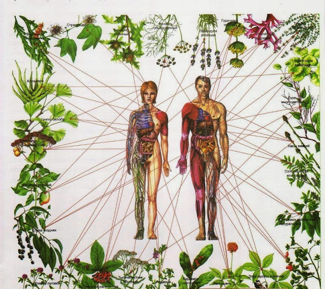 Legaturile Chakrelor cu plante si mirodenii
